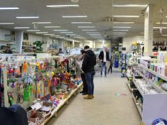 Pour 100 % des parts Animalerie à reprendre dans la Flandres Localisation non spécifiée n°2
