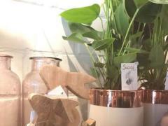 Fleuriste dans le Brabant Flamand 'Druivenstreek' Brabant flamand n°3
