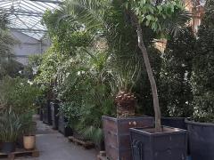 Plantenoverwintering en plantenverhuur over te nemen in de provincie Antwerpen Antwerpen