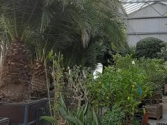 A reprendre dans la province d'Anvers société hôtel hivernage et location de plantes Anvers n°2