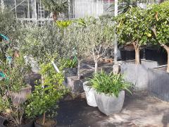 A reprendre dans la province d'Anvers société hôtel hivernage et location de plantes Anvers n°3