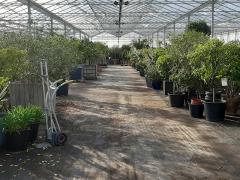 A reprendre dans la province d'Anvers société hôtel hivernage et location de plantes Anvers n°4